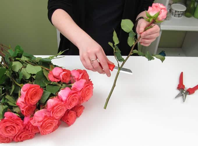 How To Care for Roses
