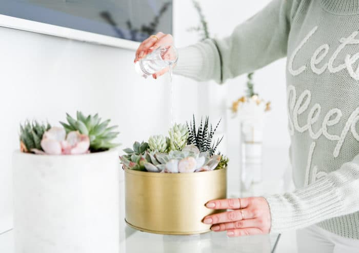 How to Water Succulents indoors
