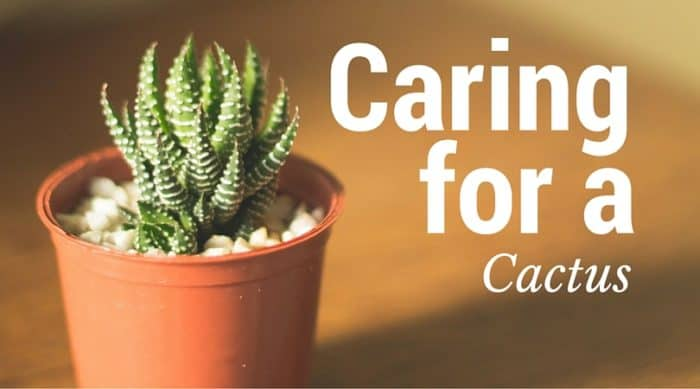 Care For Cactus Plants