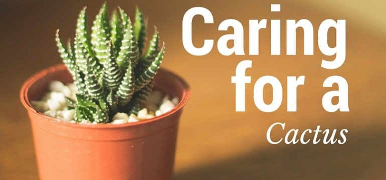 Care-For-Cactus-Plants
